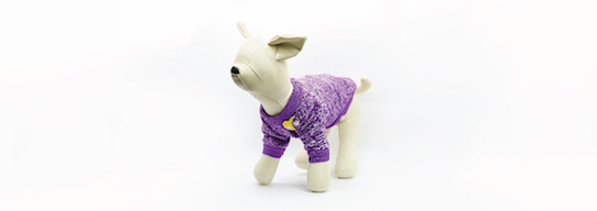 Purple dog sweater with the official TeletonUSA pin
